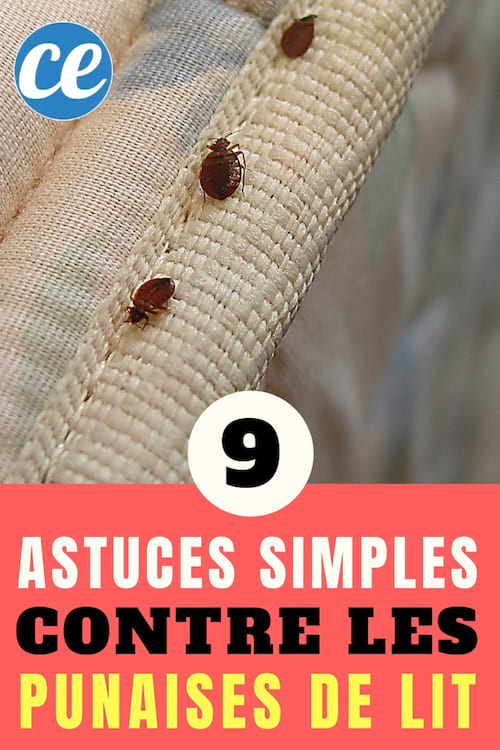 9 Effective Tips To Get Rid Of Bed Bugs (Without Toxic Products).