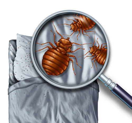 How To Detect Bed Bugs?