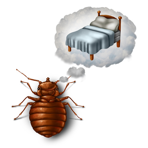 How To Eliminate Bed Bugs?