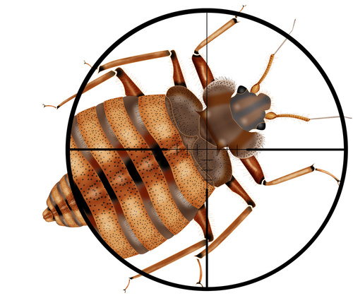 How To Kill Bed Bugs?