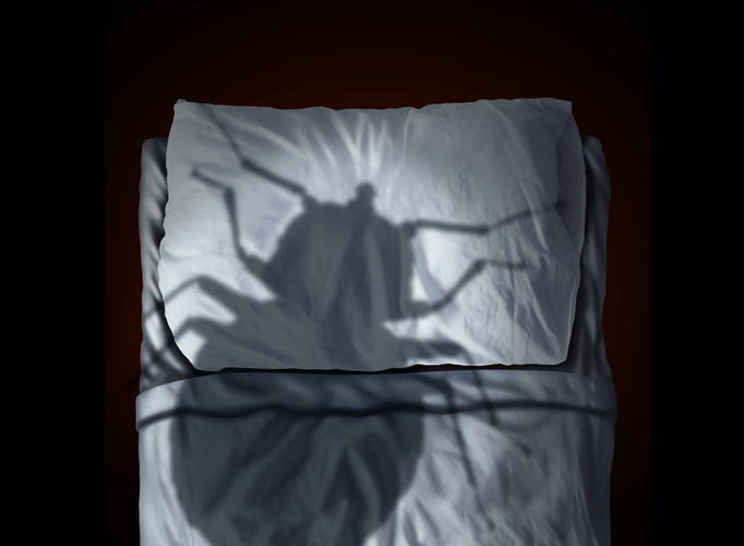 Origins Of Bed Bugs: Where Do These Critters?