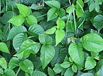 Recognize And Eliminate The Poison Ivy