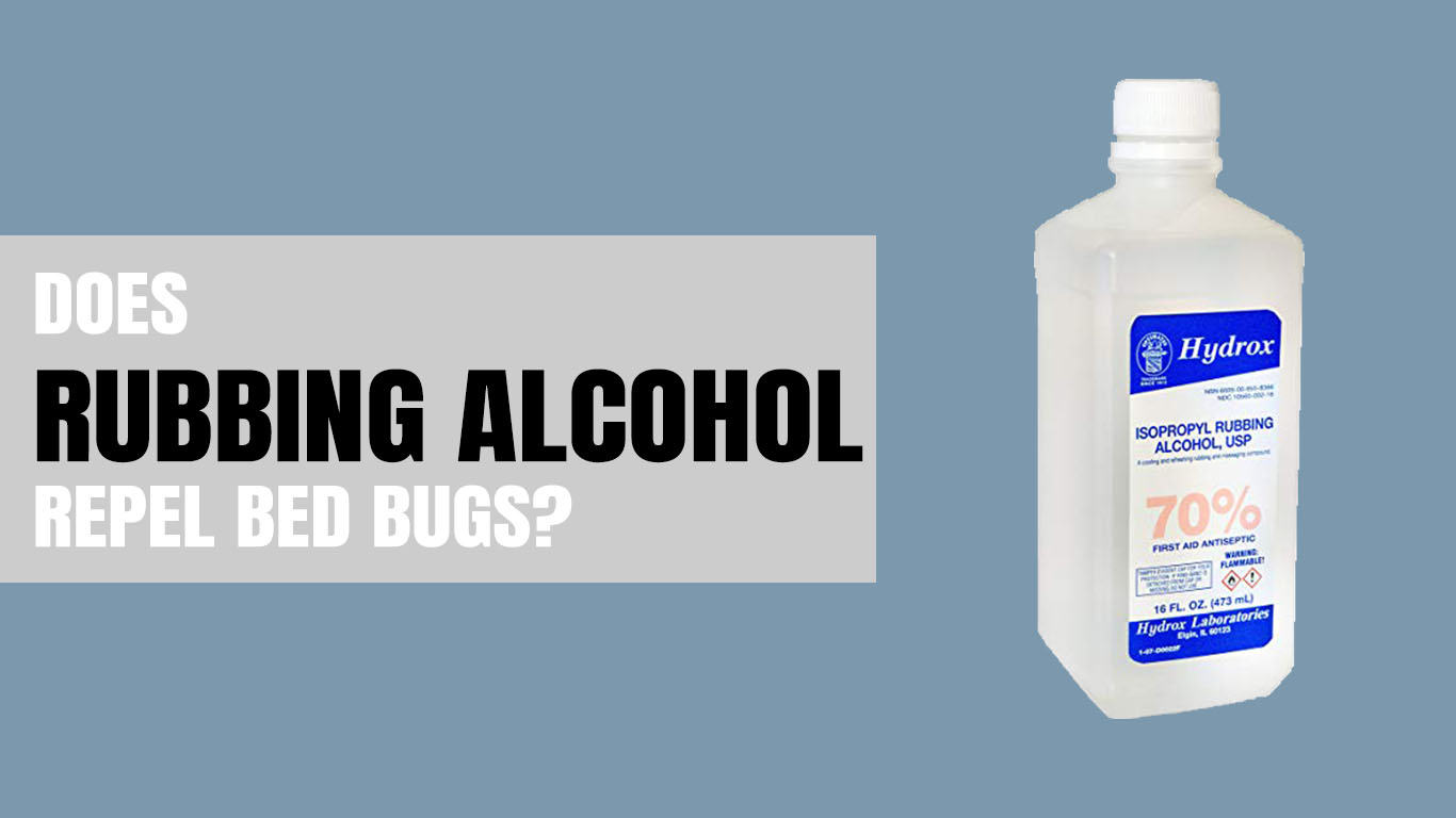Does Rubbing Alcohol Kill Bed Bugs – 3 Simple Steps – Dear