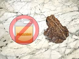 3 Ways to Get Rid of Toads in Your Yard - wikiHow
