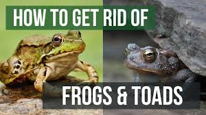 How to Get Rid of Frogs & Toads - YouTube