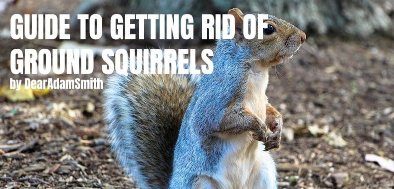 get rid of squirrels