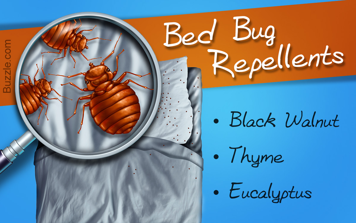 What Can You Put On Your Skin To Repel Bed Bugs